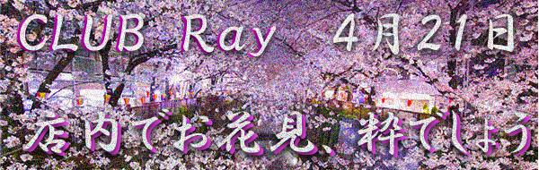 Stylish Club Ray 『花見イベント』